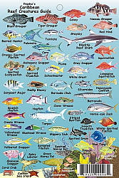Caribbean Mini Reef Creatures Road and Recreation Map.
