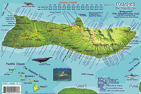 Molokai Reef Creatures Guide, Hawaii, America.