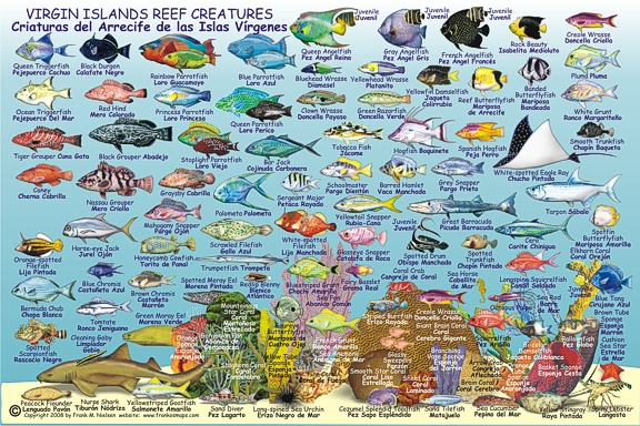 Virgin Islands Creatures Identification and Location Guide Card.