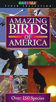 Amazing Birds of America - Travel Video.