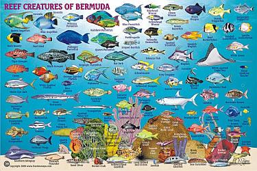 Bermuda (Fishing), Road and Recreation Map.